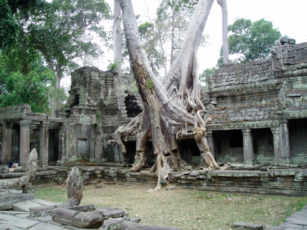 Cambodia has a number of fantastic sites to visit, the most incredible though are the Ruins of the Angkor Complex near Siem Reap