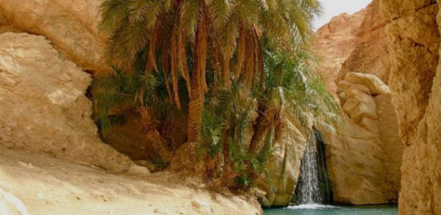 The Oasis de Montagnes outside of Tozeur is one of many well visited Oasis in Tunisia