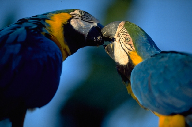 Manaus is the gateway to the Amazon and the perfect place to try some wildlife viewing