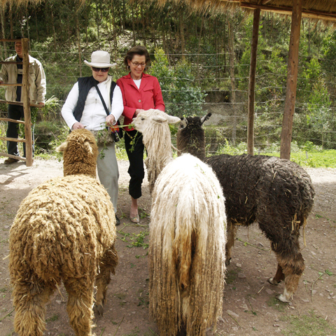 Feeding Camelids at Awanakancha
