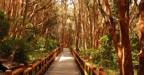 We highly recommend the day trip to Victoria Island ad the Arrayanes Forests