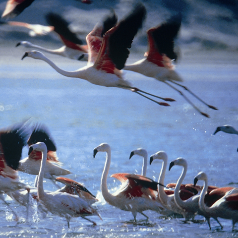 Paracas &The Ballestas Islands are amongst Perus Natural Highlights