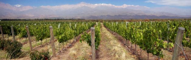 The region of Mendoza is well known for its wine production