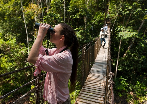 Canopy Walks are a fantastic way to view life in the Amazon Tree-Tops