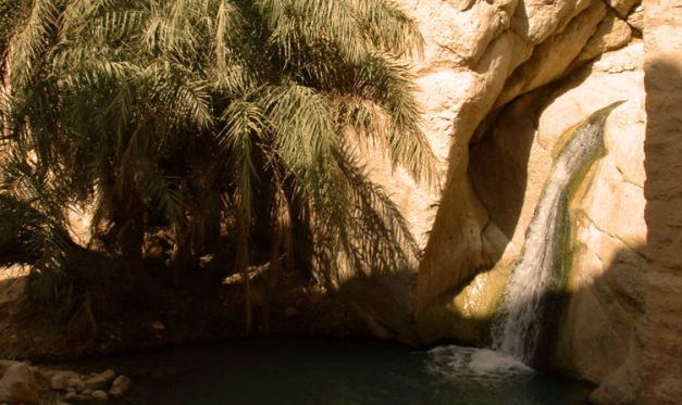 Tunisia is dotted with Oases like the one at Chebika