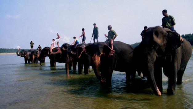A popular way to explore Chitwan National Park is by Elephant back