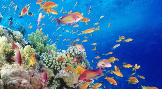 There is plenty to see when snorkeling in Dahab