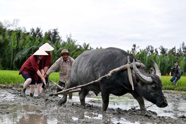 Experience Vietnamese Farm Life in Hoi An