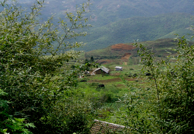 Hill Farms in Sapa