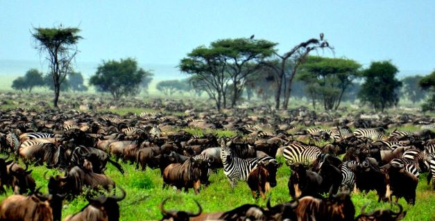 The Annual Migrations happen year round, it is a matter of planning when and where if you wish to experience them