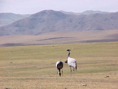 There is much more to Mongolia's bird life then their famed Eagles