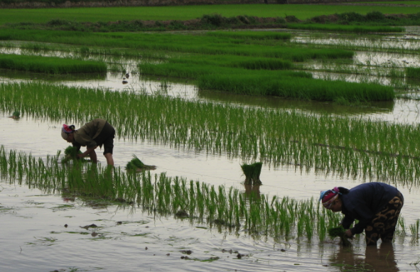 Farmers alongside the Red River Delta
