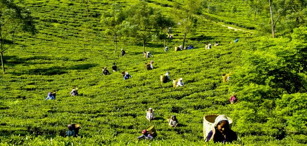 There is more to Darjeeling then its infamous Tea Plantations