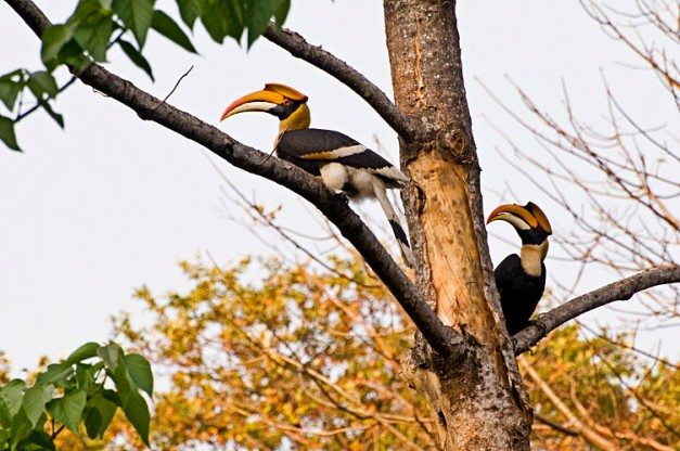 Manas National Park is home to over 380 Bird Species