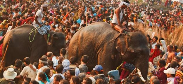 Sonepur Cattle Fair, Patna to Patna (Bengal Despatch 3) on ABN Rajmahal