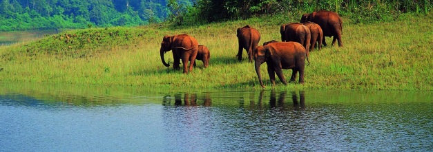 Thekkady, Periyar, Allepey, Cochin - these are the highlights of many trips to Southern India