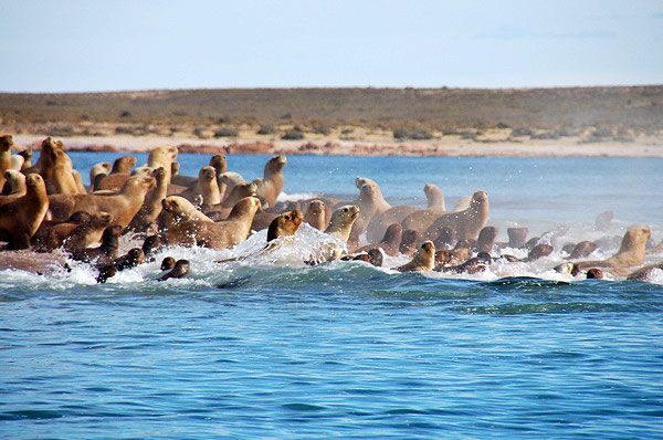 There is an incredible array of wildlife to see in the coastal regions of Argentina
