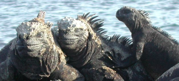 The Galapagos Island is known for its wildlife